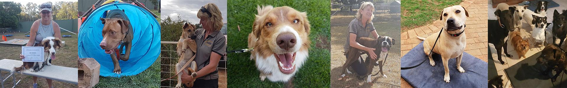 Above & Beyond Dog Rehabilitation Blog Dog Training & Rehabilitation Services Brisbane