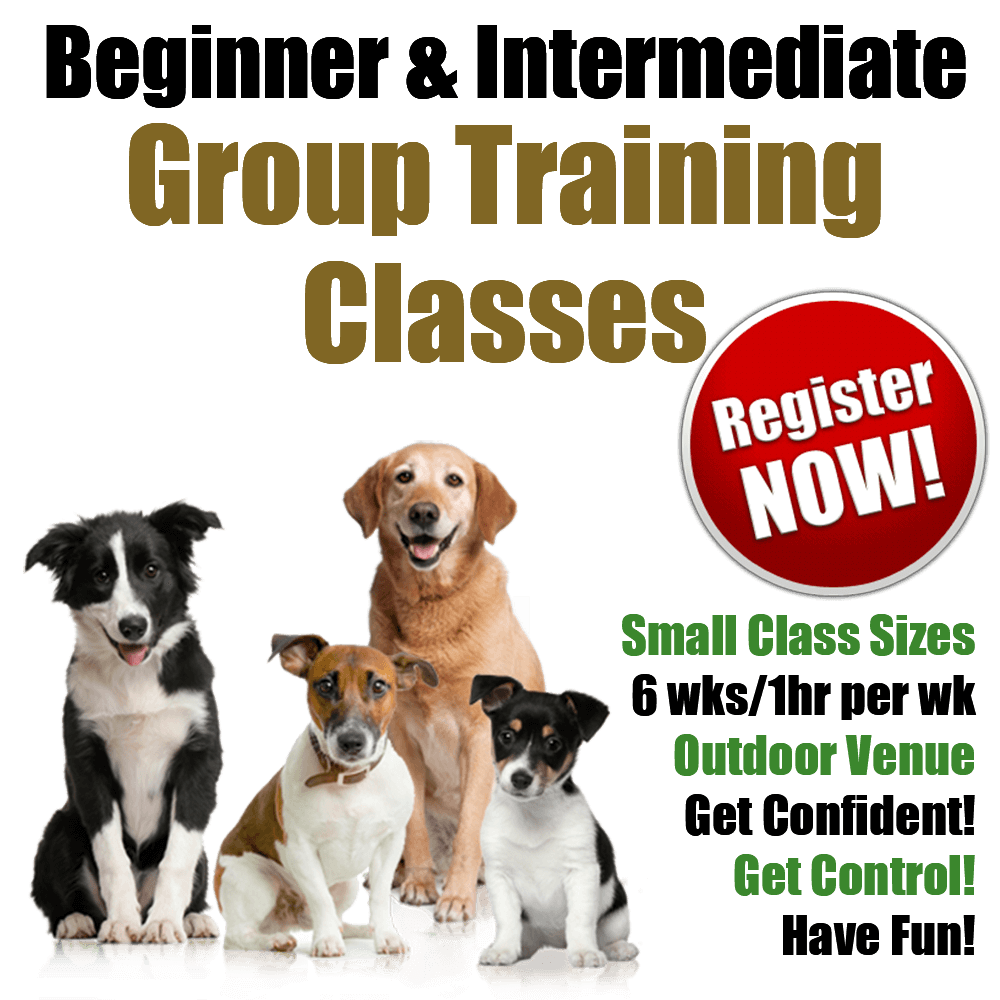 Above & Beyond Dog Training & Rehabilitation Group Training Classes